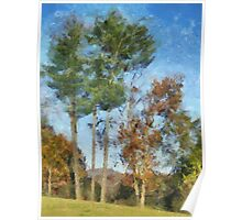 Tall Trees Against A Blue Sky Poster