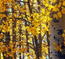 Colorado Aspen Trees in Fall Sticker