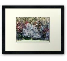 Lone Tree In A Clearing Framed Print