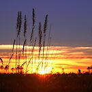 A Botswana Sunrise by jozi1