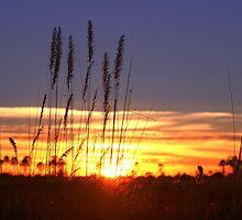 A Botswana Sunrise by jozi1