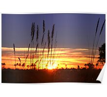 A Botswana Sunrise Poster