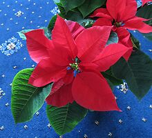 A Poinsettia for Christmas by Kathryn Jones