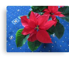 A Poinsettia for Christmas Canvas Print