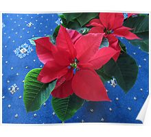 A Poinsettia for Christmas Poster