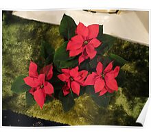 Red Poinsettia Poster
