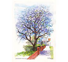 Jacaranda Tree at Christmas Time Photographic Print