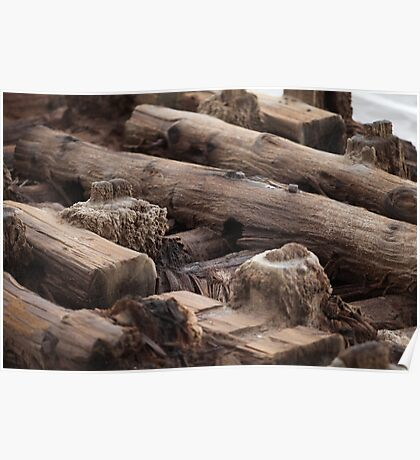 wooden foundation piles Poster