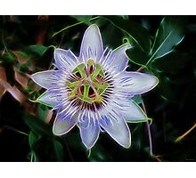 Purple Passion Flower Photographic Print
