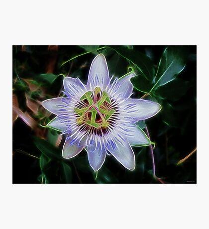 Purple Passion Flower Photographic Print