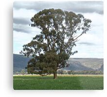 Plains Tree Metal Print