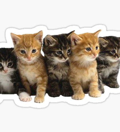 cuuuuute kittenz Sticker