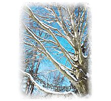 Snow Covered Holiday Photographic Print