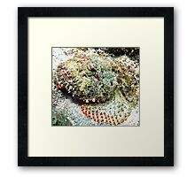 Scorpion Fish Framed Print