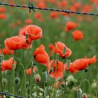 poppies - keep out! by gaylene