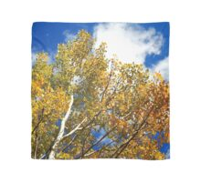 Blue Rocky Mountain Skies and Golden Aspen Trees in fall Scarf