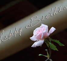 Birthday Rose by bellecards