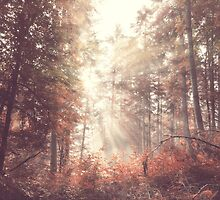 Vintage beauty autumn forest with sunrays in the morning by juras