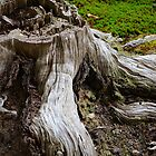 Old Roots by eXistenZ