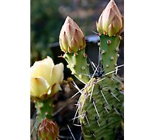Prickly Pear Rose Photographic Print