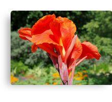 Red Canna Lilly Flower in Summer Garden Canvas Print