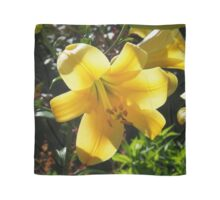 Sunlight filtering through Yellow Day Lilly Flower Scarf