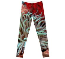 Giant Green Sea Anemone feeding near Red Coral Reef Wall Leggings