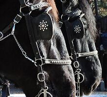 Percheron Pair by © Betty E Duncan ~ Blue Mountain Blessings Photography