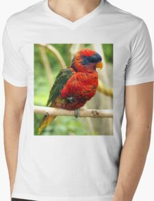 Rainbow Colored Lorikeet Bird posting in a Tree Mens V-Neck T-Shirt