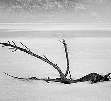 Driftwood by homendn