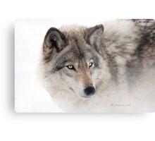 ...see you next week my friend Wolf.... Metal Print
