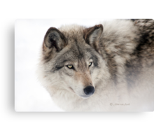 ...see you next week my friend Wolf.... Canvas Print