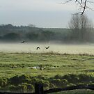 Ducks in Mist by Sue Robinson
