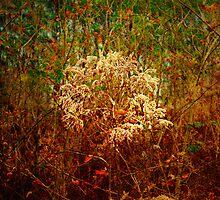 Hidden in the tall grass by Scott Mitchell