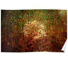 Hidden in the tall grass Poster