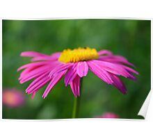 Pretty little flower Poster