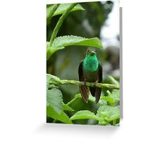 Decked Out in Green Greeting Card