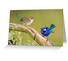 Splendid Fairy-wren (Female & Male) Greeting Card