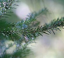 Blur of pine trees close up by creativedesignz