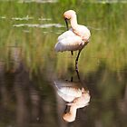 Spoonbill Grace by byronbackyard