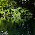 Green Tropical Paradise - the Gardens of the Museum of Art of Puerto Rico by Georgia Mizuleva