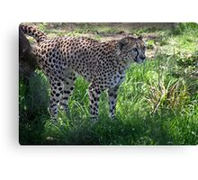 Marking my territory Canvas Print