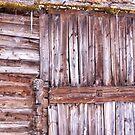 Snowy wood by LadyFi