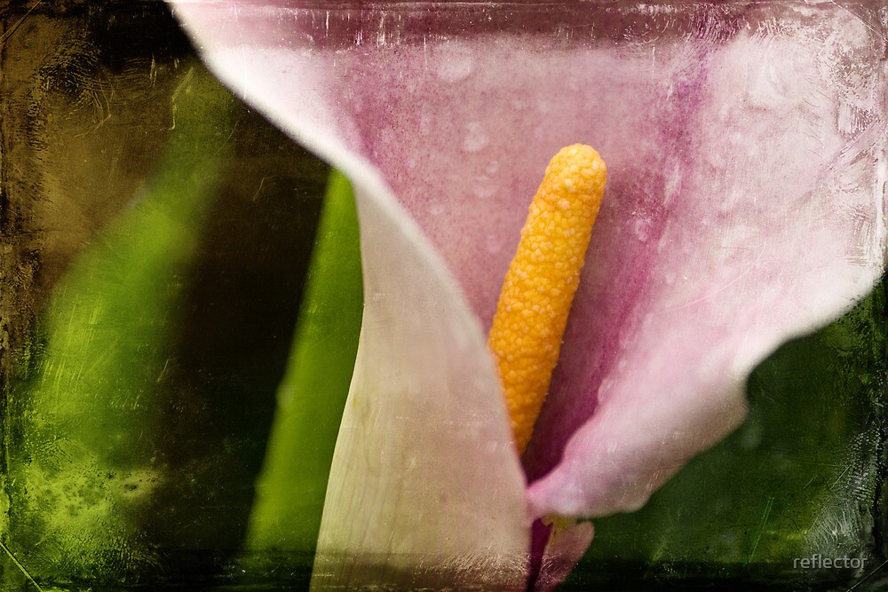 Hallmark Of Summer by reflector