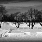 Fences Shadows and Trees by nastruck