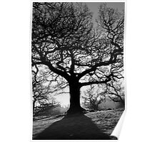 Spooky tree in black and white Poster