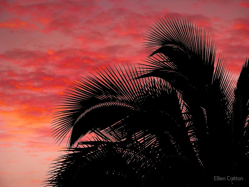 Tropical Silhouette 1 by Ellen Cotton