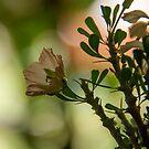 Northen Cape Wild Flower by Mauds