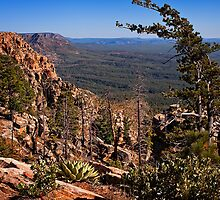 On the Edge of the Mogollon Rim by Lee Craig