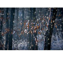 Melting Frost Photographic Print